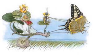 エルンスト・クライドルフ – キンポウゲさんのおでかけ (Blumen Maerchenより)のサムネイル画像
