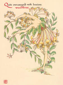 thumbnail Walter Crane – Quite over-canopied with luscious woodbine, (A Midsummer Night's Dream) [from Flowers from Shakespeare's Garden]