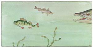 エルサ・ベスコフ – 挿絵1 (しりたがりやのちいさな魚のお話より)のサムネイル画像