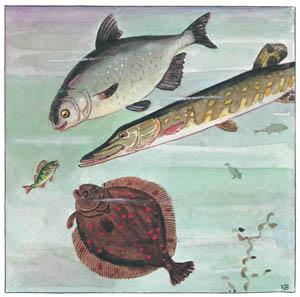 エルサ・ベスコフ – 挿絵2 (しりたがりやのちいさな魚のお話より)のサムネイル画像