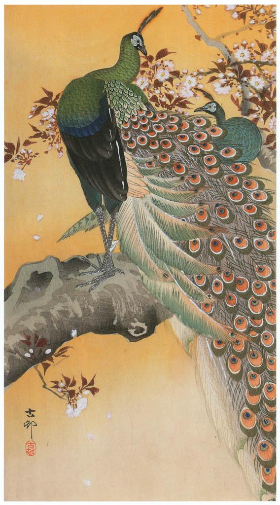 小原古邨 – 桜につがいの孔雀 [版画芸術 181号より] パブリックドメイン画像
