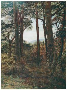 ジョン・エヴァレット・ミレイ – ヨーロッパアカマツ 「孤独な森の静寂」 (ワーズワースの詩) [ジョン・エヴァレット・ミレイ展より]のサムネイル画像